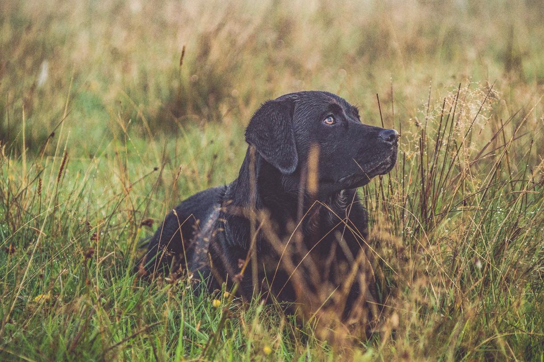 Tierfotografie_Hund-1.marked